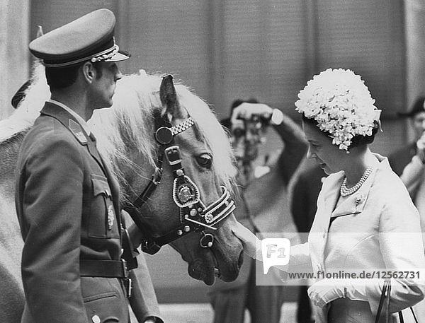 Queen Elizabeth II pats a Helflinger mare  at the Spanish Riding school in Vienna  1969. Artist: Unknown