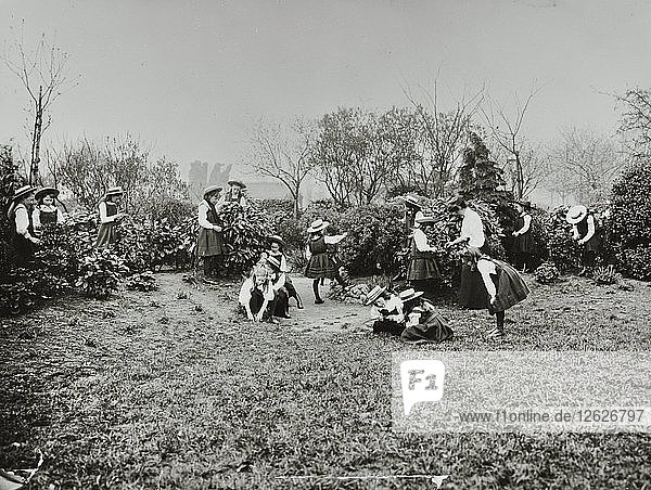 A class from Fulham County Secondary School having a nature lesson  London  1908. Artist: Unknown.