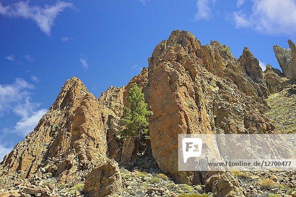 Volcanic rocks. Parque Nacional Cañadas del Teide  Tenerife  Canary Islands  Spain.