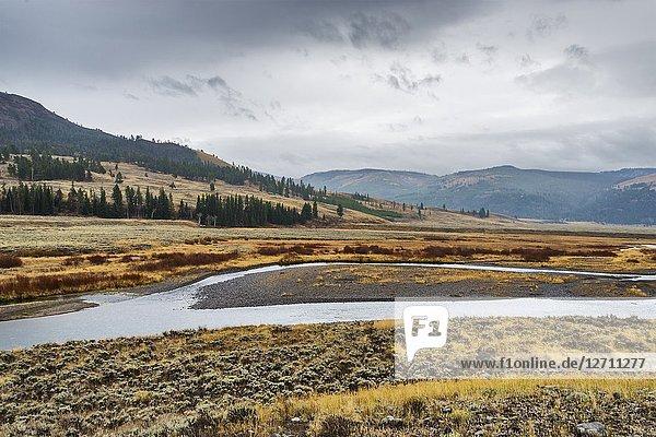 Soda Butte Creek  Yellowstone National Park  USA.
