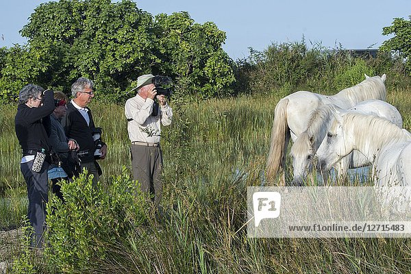 Photo tour members photographing Camargue horses in the Camargue in southern France.