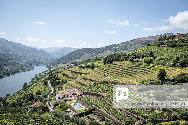 Douro Valley. Vineyards and landscape  Portugal.