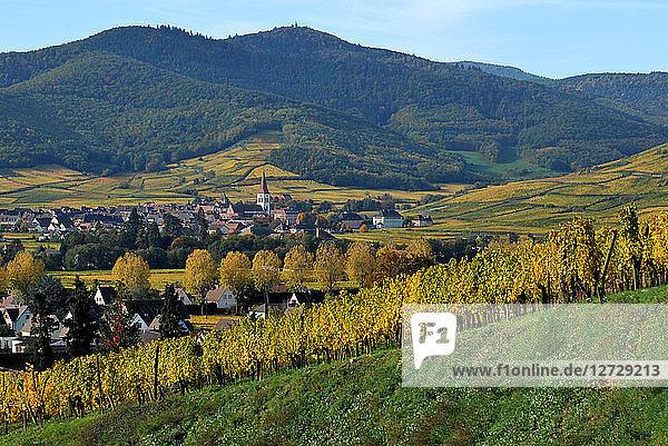 village of Ammerschwihr in his vineyard in autumn Alsace  France