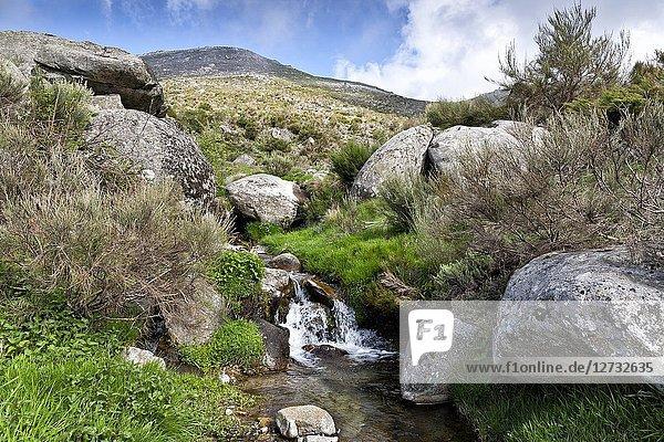 Stream at Eliza gorge in the Sierra de Gredos. Avila. Spain