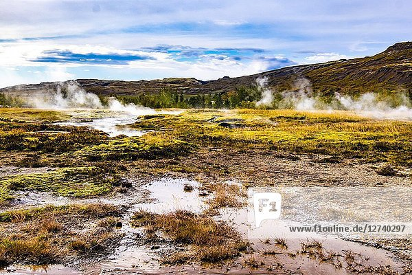 Little hot springs in the geothermal area of Haukadalur Valley  Southwest Iceland.