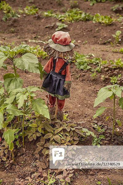Rag doll standing in a garden.