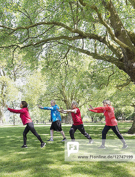 Active seniors practicing tai chi in park under tree