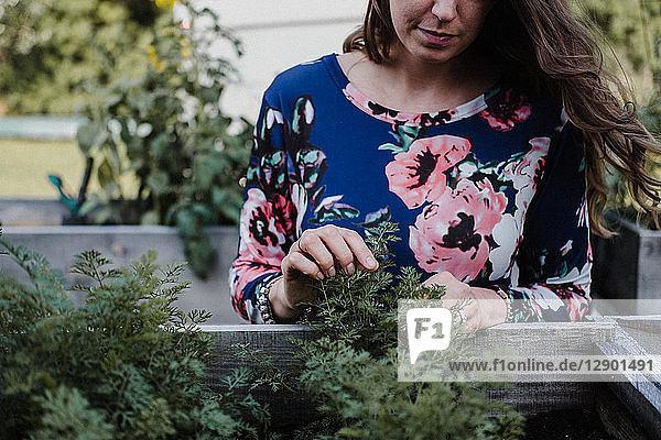 Frau  die ihre Pflanzen kontrolliert