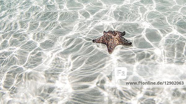 Starfish  Cozumel  Quintana Roo  Mexico