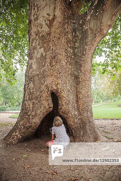 Junge schaut hohl im Baum nach oben