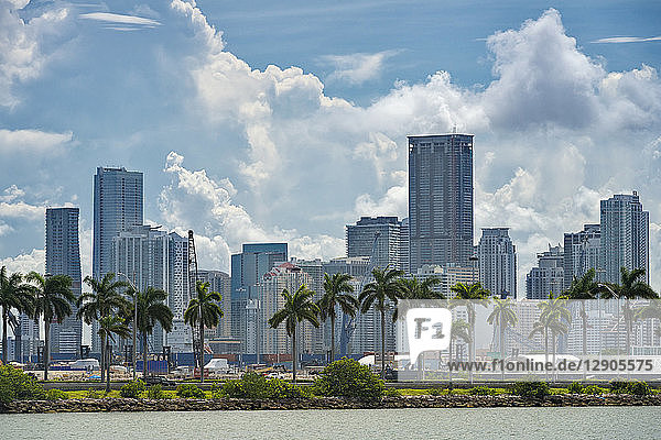 USA  Florida  Miami  Downtown  skyline with high-rises and palm trees