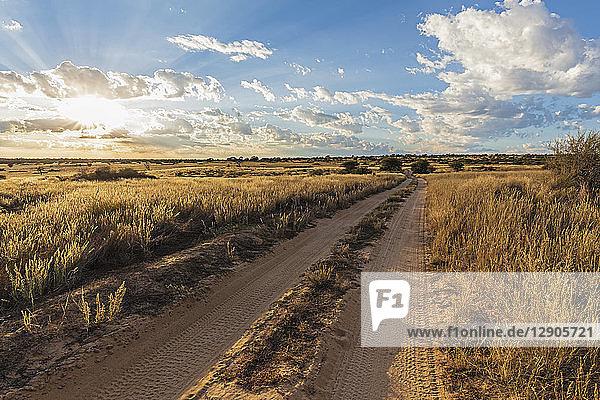 Africa  Botswana  Kgalagadi Transfrontier Park  Mabuasehube Game Reserve  sand track at sunrise