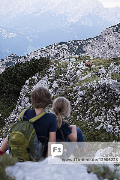 Austria  Salzburg State  Loferer Steinberge  brother and sister on a hiking trip in the mountains meeting an ibex