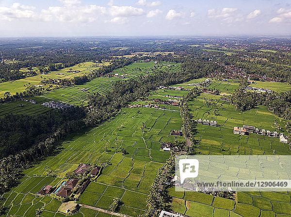 Indonesia  Bali  Ubud  Aerial view of rice fields