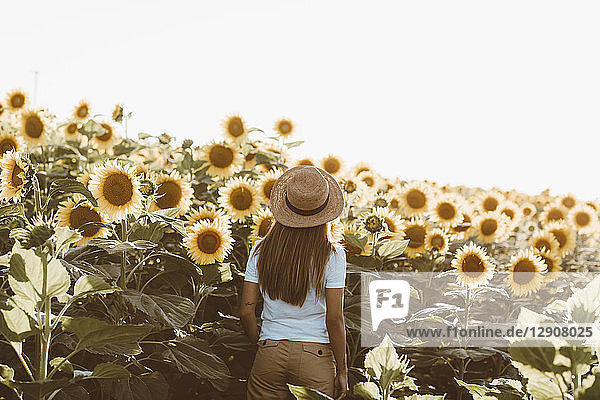 Back view of young woman standing in a field of sunflowers