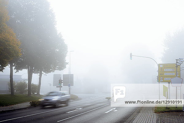 Man and dog crossing street against the red light on misty morning in autumn