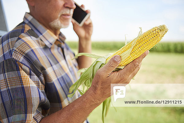 Farmer holding corn cob and talking on cell phone on field