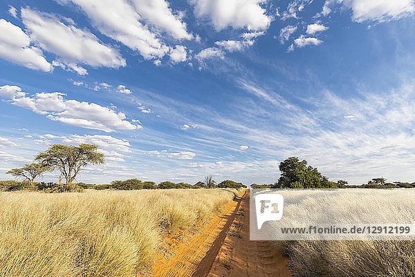 Africa  Botswana  Kgalagadi Transfrontier Park  Mabuasehube Game Reserve  empty sand track
