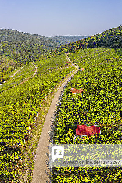 Germany  Baden-Wurttemberg  Aerial view of vineyards At Gundelsbach Valley