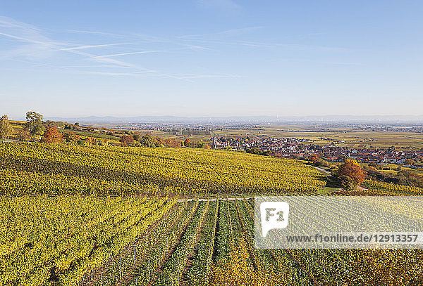 Germany  Rhineland-Palatinate  Kallstadt  vineyards in autumn colours  German Wine Route