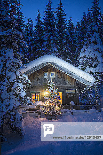Austria  Altenmarkt-Zauchensee  Christmas tree at illuminated wooden house in snow at night