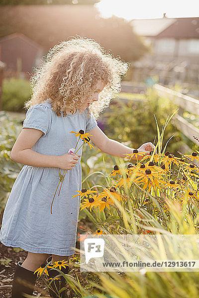 Little girl picking flowers in the garden