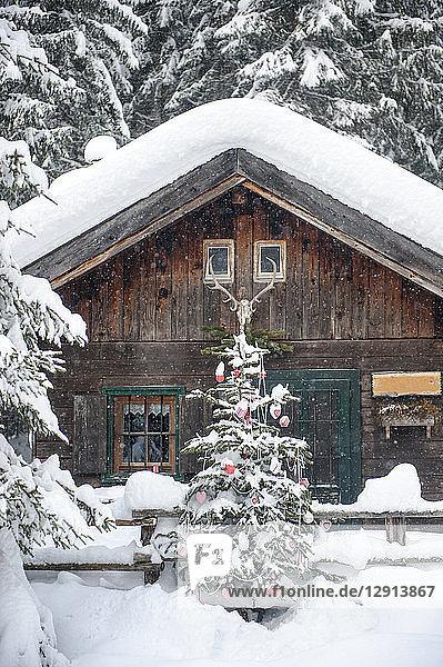 Austria  Altenmarkt-Zauchensee  Christmas tree at wooden house in snow