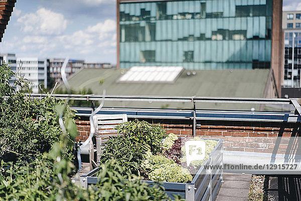 Germany  Duisburg  Urban rooftop garden