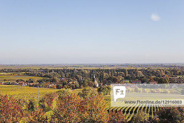 Germany Rhineland-Palatinate  Pfalz  German Wine Route  wine village Forst and vineyards in autumn colours