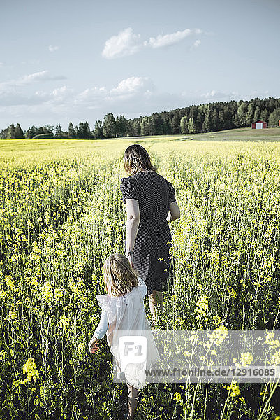 Back view of little girl walking with her mother in rape field