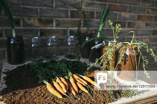 Carrots and other vegetables grown in glass jars