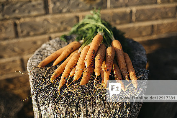 Bunch of carrots harvested on tree stump