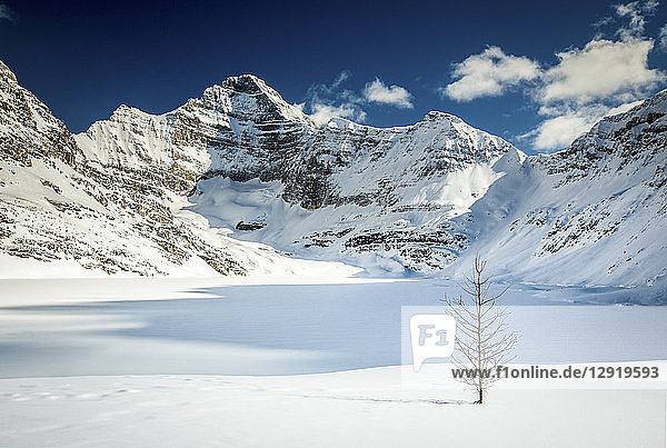 Majestic natural scenery with snow covered mountains and Lake O'Hara in winter  Yoho National Park  Alberta  Canada