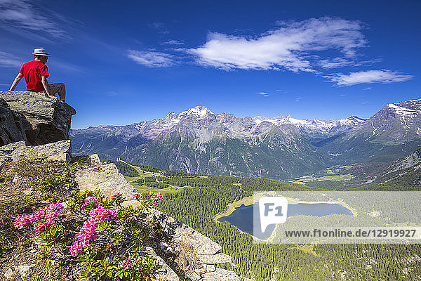 Lake Palu and Mount Disgrazia viewed from above with rhododendrons in flower  Valmalenco  Valtellina  Lombardy  Italy  Europe