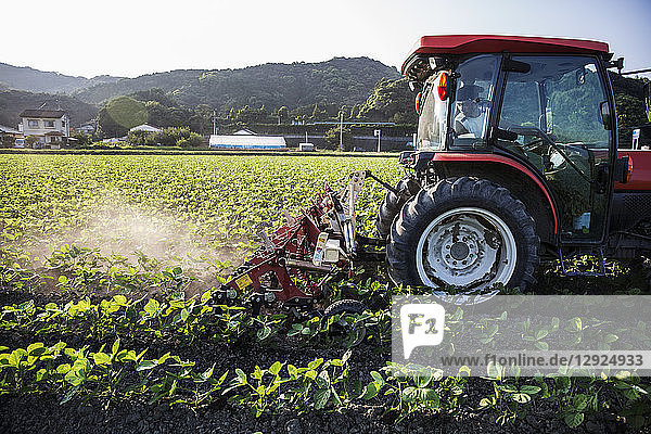 Ein japanischer Bauer fährt einen roten Traktor durch ein Feld mit Sojabohnenpflanzen.