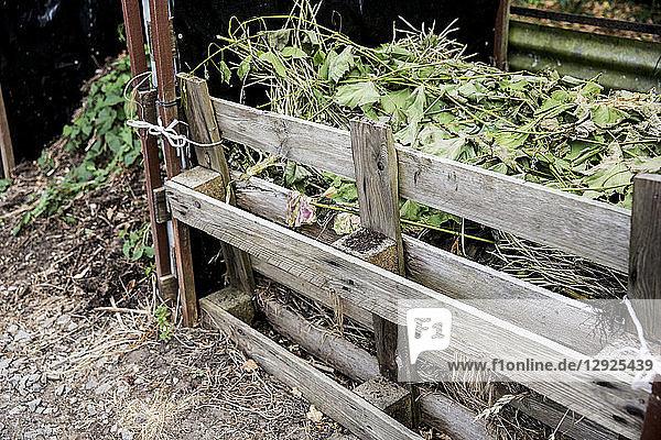 Komposthaufen aus Holzpaletten im Kleingarten.