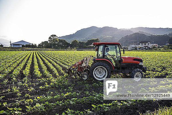 Japanischer Landwirt fährt roten Traktor durch ein Feld mit Sojabohnenpflanzen.