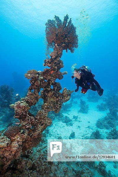 Female scuba diver look at on Coral pillar.