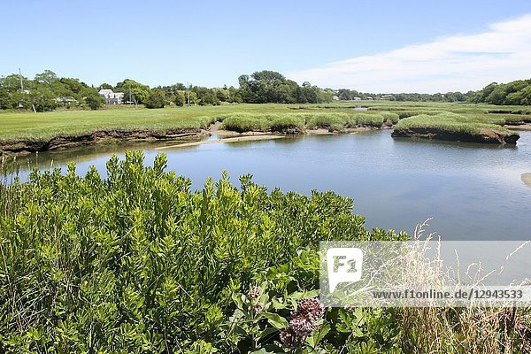Wetlands  Barnstable  Cape Cod  Massachusetts  United States.