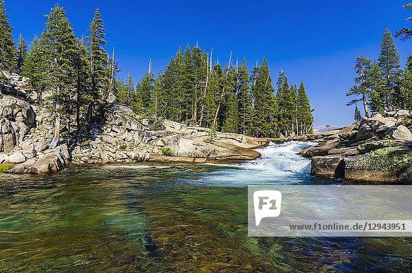 Cascade on the Tuolumne River  Tuolumne Meadows  Yosemite National Park  California USA.