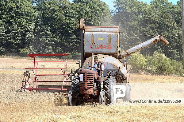 Harvesting with Johnston Harvester -53 tractor and a Claas combine tresher 1950- at oldtimes harvestfestival in Svenstorp  Scania  Sweden.