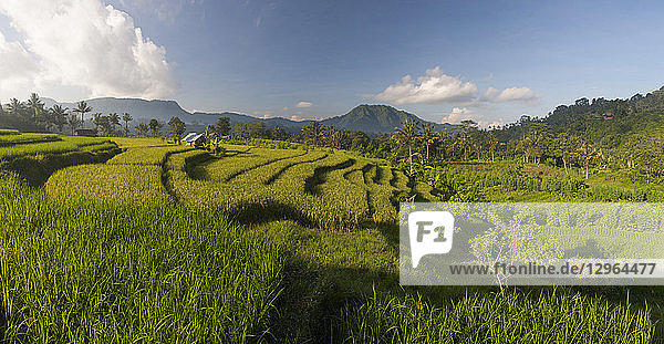 Rice field in front of Agung volcano in Sidemen  Bali  Indonesia  Panoramic view