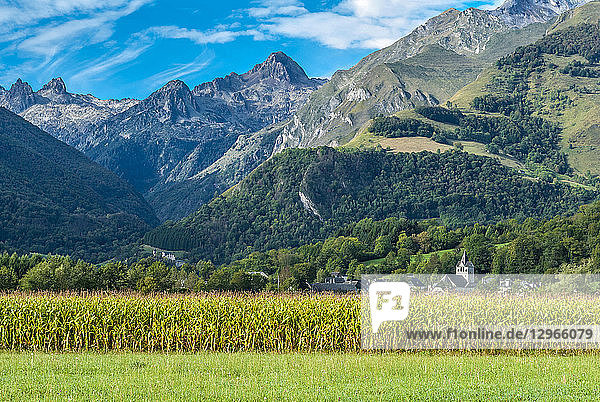 France  Pyrenees National Park  Occitanie region  Val d'Azun  mountains and cornfield in front of the Marsous hamlet
