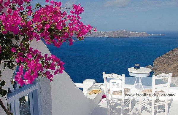 Scenic with pink flowers in Santorini Greece in Greek Islands