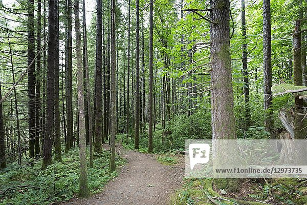 North America  Canada  British Columbia  Vancouver Island  Elk Falls Provincial Park  Millennium Hiking Trail.