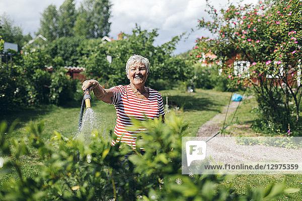 Senior woman watering garden with hose
