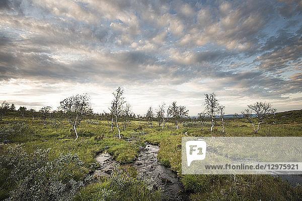 Streams in Pallas-Yllastunturi National Park  Finland