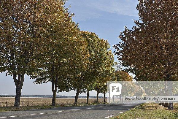Route de campagne bordee d'arbres  departement d'Eure-et-Loir  region Centre-Val de Loire  France  Europe/tree-lined country road  Eure-et-Loir department  Centre-Val de Loire region  France  Europe.
