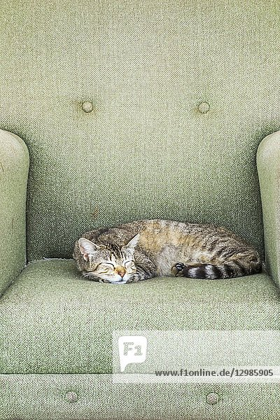 Cat relaxing in an armchair placed on a sidewalk  quarteira  algarve  portugal.