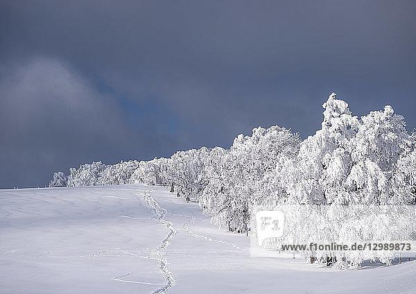 Winterlandschaft am Schauinsland im Schwarzwald  BRD